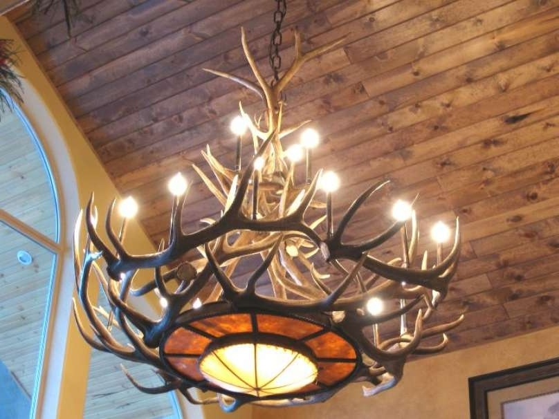 Large Antler Chandelier Intended For Most Current Fresh Real Antler Chandelier Antler Chandeliers For Sale Real Mccoy (View 5 of 10)