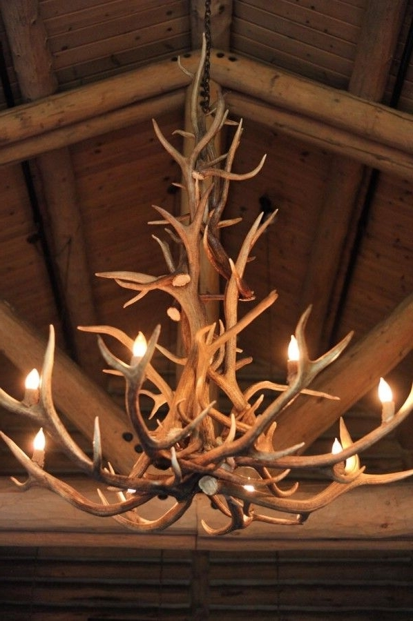 Most Up To Date Antler Chandeliers Regarding Antler Chandeliers Best 25 Antler Chandelier Ideas On Pinterest (View 5 of 10)