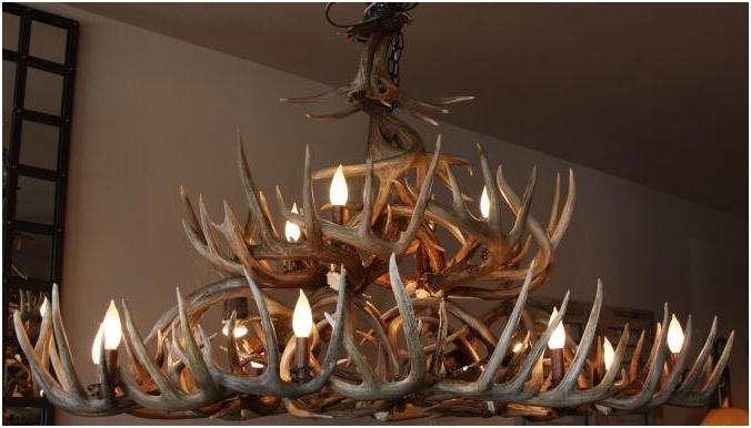 Newest Custom Deer Antler Chandeliers And Lighting Pertaining To Antler Chandeliers And Lighting (View 5 of 10)