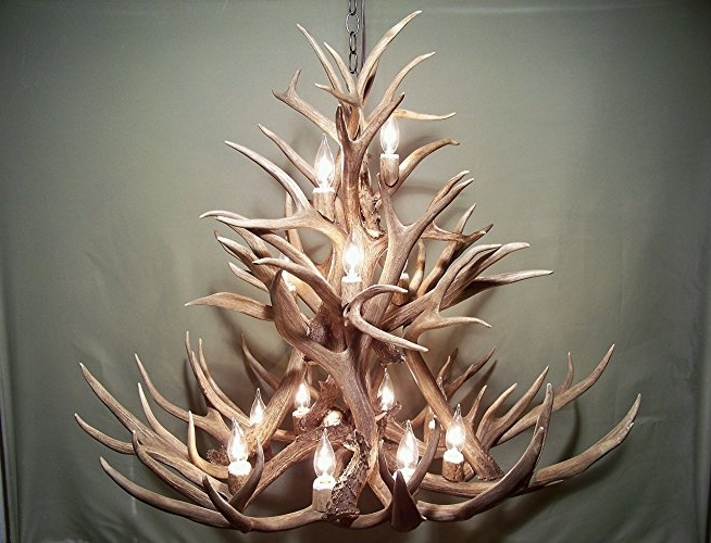 Well Liked Antler Chandelier For Amazon: Real Antler Chandelier, 13 Lights, Shed Antler Art, Elk (View 10 of 10)