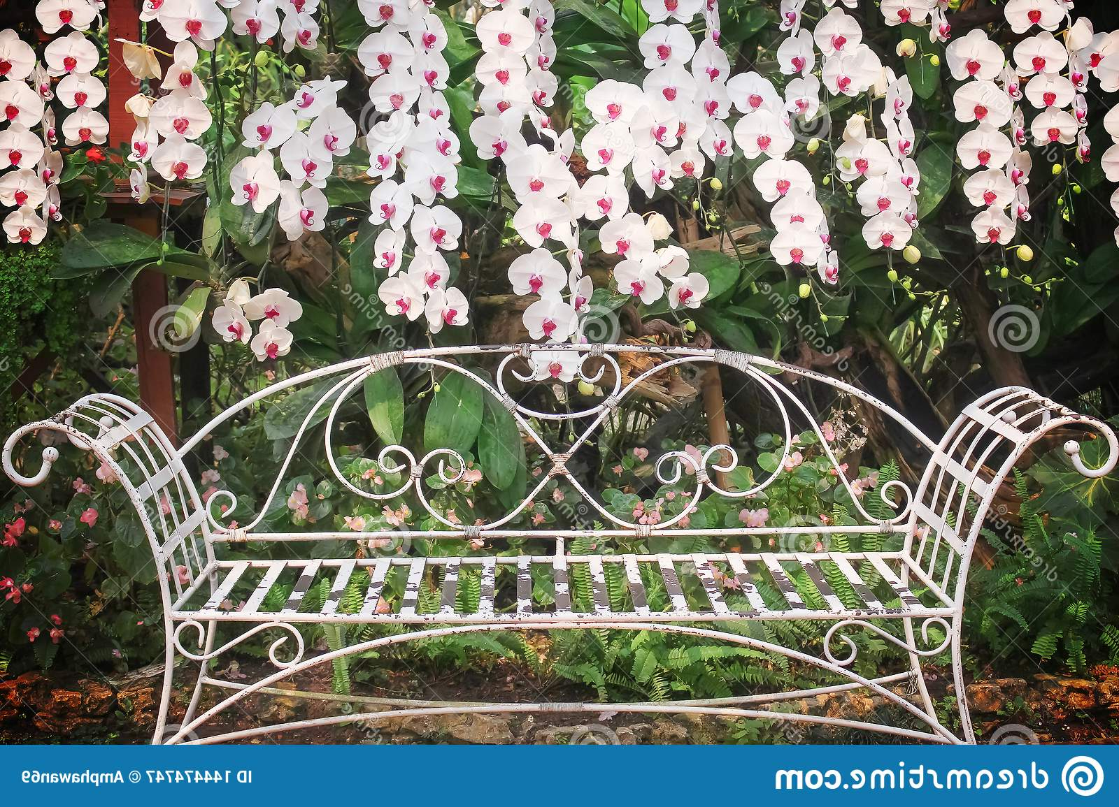 Most Popular Colorful White Orchids Blooming And Old White Steel Bench In In Blooming Iron Garden Benches (View 29 of 30)