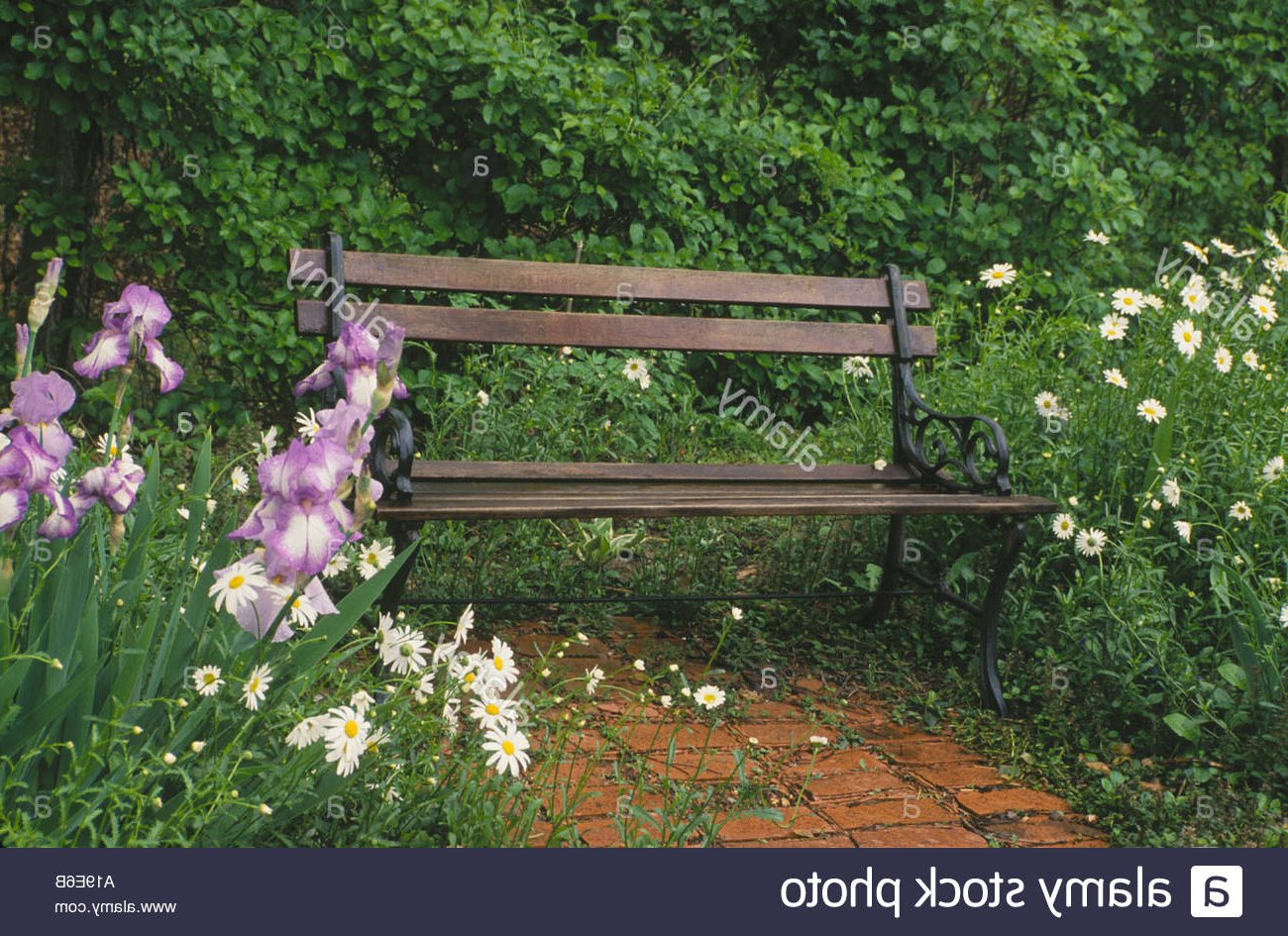 Most Popular Wooden And Iron Garden Bench Sits In Secluded Corner Of Within Blooming Iron Garden Benches (View 7 of 30)