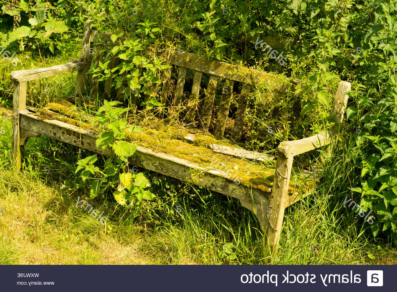 Newest Weir Garden Stools Intended For Old Overgrown Garden Bench,uk Stock Photo – Alamy (View 26 of 30)