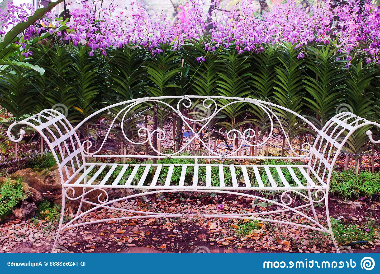 Old White Iron Bench In Garden With Colorful Flowers Purple With 2019 Blooming Iron Garden Benches (View 5 of 30)