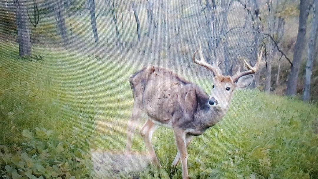 Cwd – How Serious Is It? – Page 3 – The Hunting Beast Throughout Widely Used Deer Trail Armchairs (View 27 of 30)
